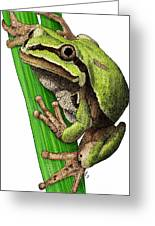 Arizona Tree Frog Greeting Card