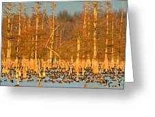 Arkansas Ducks Greeting Card