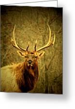 Arkansas Elk Greeting Card