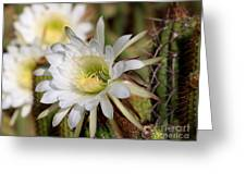 Array Of Night Bloomers Greeting Card