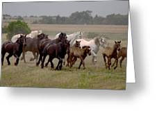 Arrington Ranch Herd - 2 Greeting Card