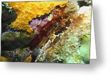 Arrow Crab In A Rainbow Of Coral Greeting Card