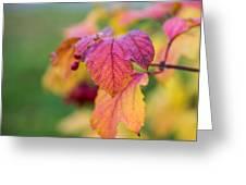 Arrowwood Leaf - Featured 3 Greeting Card