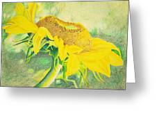 Sunflower Print Art For Sale Colored Pencil Floral Greeting Card