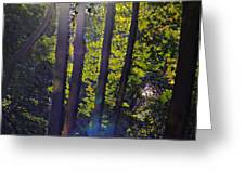 Art In The Woods Greeting Card by Donald Torgerson