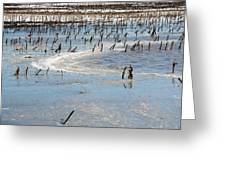 Artic Thaw Greeting Card