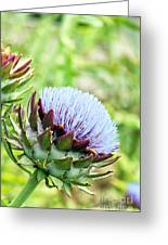 Artichoke Flower Greeting Card