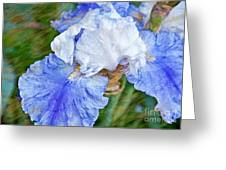 Artistic Japanese Iris Blue And White Flower Greeting Card