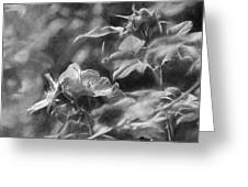 artistic painterly Black and white monochromatic two dogroses summer 2014 Greeting Card