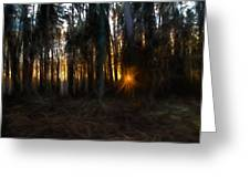 Artistic Painterly Sun Between Trees  Greeting Card