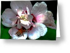 Artistic Shades Of Light And Pollinating Bee Greeting Card