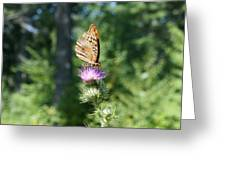 Artistic Butterfly Stand  Greeting Card