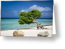 Aruba Tree Greeting Card