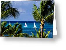 Arubian Sails Greeting Card