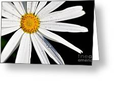 As Bright As A Daisy... Greeting Card