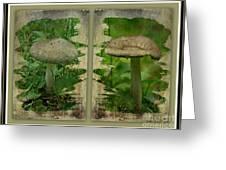 As I Age - A Mushroom's Tale Greeting Card