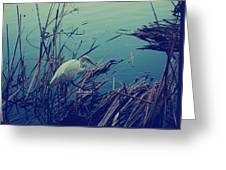 As The Light Fades Greeting Card