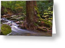 As The River Runs Greeting Card