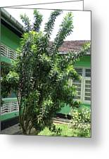 Asant Plants Greeting Card