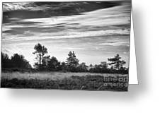 Ashdown Forest In Black And White Greeting Card