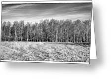 Ashdown Forest Trees In A Row Greeting Card by Natalie Kinnear