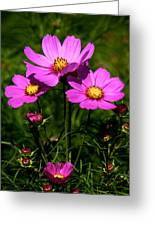 Asheville Wildflowers Greeting Card