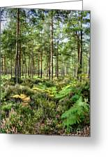 Ashley Heath Forest Greeting Card