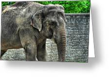Asian Elephant  0a Greeting Card