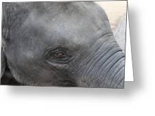 Asian Elephant Face Greeting Card