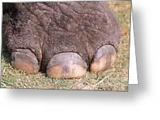 Asian Elephant Foot Greeting Card