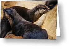 Asian Otters Greeting Card