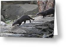 Asian Small Clawed Otter - National Zoo - 01132 Greeting Card