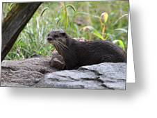 Asian Small Clawed Otter - National Zoo - 01137 Greeting Card