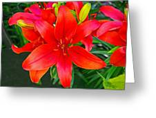 Asiatic Hybrid Lily Greeting Card