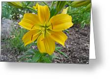 Asiatic Lily 2 Greeting Card