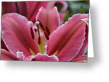 Asiatic Pink Greeting Card