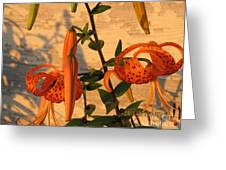 Asiatic Tiger Lily Greeting Card