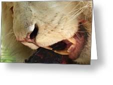 Aslan - Red In Tooth Greeting Card