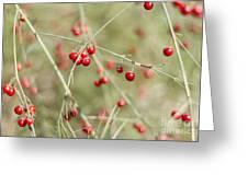 Asparagus Bokeh Greeting Card