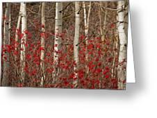 Aspen And Berries Greeting Card