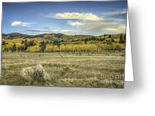 Aspen And Boulder Greeting Card