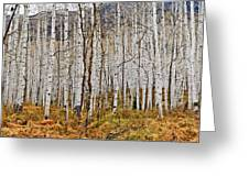 Aspen And Ferns Greeting Card