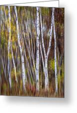 Birch Trees At Lake Maria State Park Minnesota Greeting Card