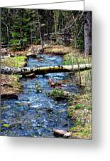 Aspen Crossing Mountain Stream Greeting Card