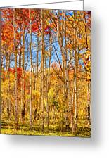 Aspen Fall Foliage Portrait Red Gold And Yellow  Greeting Card