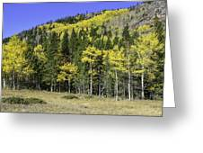 Aspen Foliage Greeting Card by Tom Wilbert