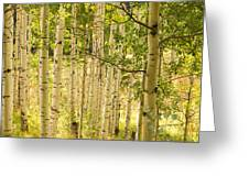 Aspen Forest Greeting Card