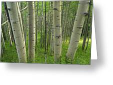 Aspen Forest In Spring Greeting Card