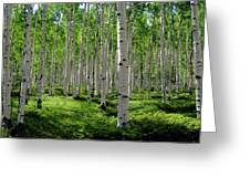 Aspen Glen Greeting Card by The Forests Edge Photography - Diane Sandoval