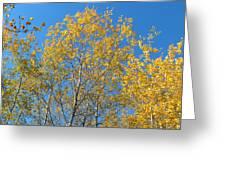 Aspen Gold Greeting Card